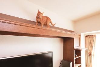 キャットウォークをリフォーム。愛猫に対応した設計でリフォーム。江別市のペット・内装リフォーム事例を紹介。愛猫との暮らしも考えた楽しいアイデアあふれるリフォーム。猫が室内でも動き回れるキャットウォークをリビングに新設。既存の家具やステンドグラス、絵画など、置くものと配置に合わせシーリングライトから引き戸の取っ手まで、好みに合わせてインテリアをセレクト。施工は株式会社SAWAI建築工房