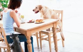 あなたの犬はどのタイプ?